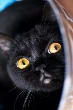Le chat noir ✿✿