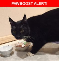 Is this your lost pet? Found in Eagle River, AK 99577. Please spread the word so we can find the owner!  Description: Found cat near Meadow Creek Drive and Old Eagle River Road.  Cat is mostly black with 4 white paws & belly, good sized (big), and 6 toes in front.  Nearest Address: Near Meadow Creek Drive and Old Eagle River Road.