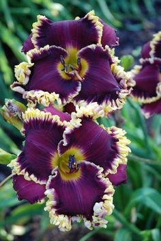 Buffalo Thunder Day Beautiful gorgeous pretty flowers