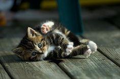 Wey hey! #kitten #cats