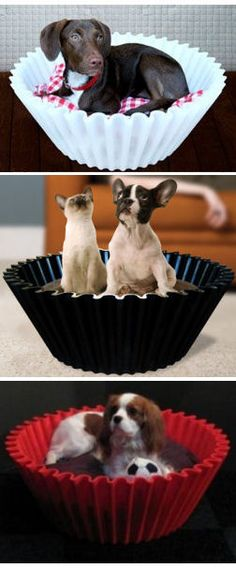Cupcake Dog Beds for Mans Best friend ~♥ Love these SO cUte & easy to clean!