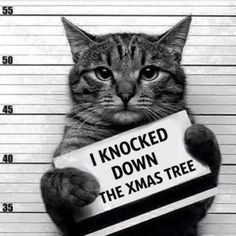 Busted! And by busted, I mean the tree...lol!