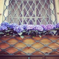 Adore these hydrangea flower boxes! Beautiful day in NYC :)