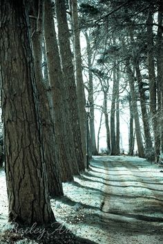 Mystical Trees and Lamppost Green Shadows by BaileyAroPhotography, $25.00