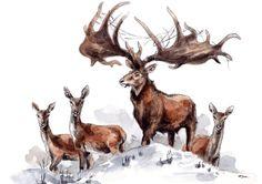 Prehistoric World, Prehistoric Creatures, Irish Elk, Cave Drawings, Fantastic Beasts, Ancient History, Fossils, Archaeology, Museum