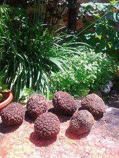 Summer #truffles #italiancooking #maremma #tuscany lostinmaremma.com