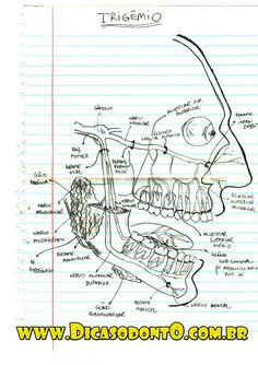 O Nervo Trigêmio