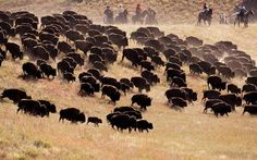 custer state park in south dakota.i've already been there a few times, but loved it so much i wouldn't mind going back! Sturgis 2014, Prairie Dogs, Custer State Park, Country Magazine, Student Council, Wildlife Art, Old West, Great Memories, Bison