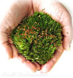 Live Moss / Terrarium Plants