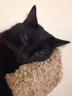 C.K. Dexter Haven (beautiful black cat) is a sleepy boy!