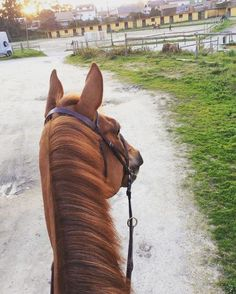 I love this horse's curious look!