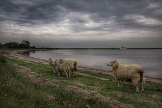 Den Lollandske Natur