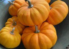 Jack Be Little Pumpkin 15 Seeds