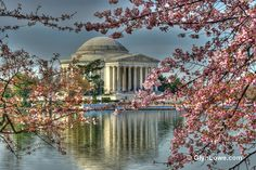 Thomas Jefferson Memorial  - This memorial to our 3rd President, Thomas Jefferson, sits on the edge of the Tidal Basin in Washington DC. Jefferson has a long list of accomplishments including writing the Declaration of Independence (available for viewing at the National Archives) which is what he is most known for. (https://www.facebook.com/TravelingWarrior) #attractions #Jefferson #WashingtonDC Photo by: Glyn Lowe Photoworks