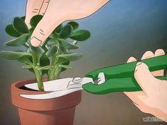 Imagen titulada Grow a Jade Plant Step 1