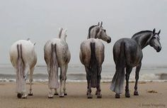 The only Shades of Grey a Horse Woman needs!!