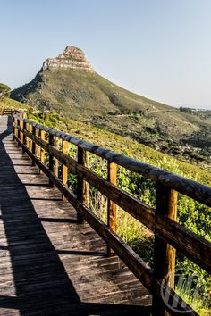 A view of Lions Head from Table Mountain. Nordic Walking, Table Mountain, The Beautiful Country, Africa Travel, Heartland, Pathways, Cape Town, Ferns, Bridges