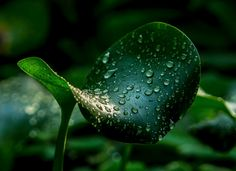green leave and drops by Michael Rehbein on 500px