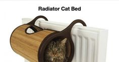 Funny pictures about 25 Awesome Furniture Design Ideas For Crazy Cat People. Oh, and cool pics about 25 Awesome Furniture Design Ideas For Crazy Cat People. Also, 25 Awesome Furniture Design Ideas For Crazy Cat People photos. Crazy Cat Lady, Crazy Cats, Cool Cats, Son Chat, Pet Furniture, Furniture Ideas, Furniture Design, House Furniture, Cat People