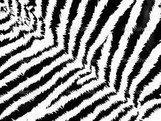 Zebra pattern — Stock Photo © AGphoto #