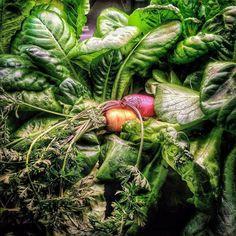 Repost @growningundo  The next few posts will be from an experimental photo project series from my #iphone4s & #ipadMini of #FoodPorn lol - #tastesgreat #GrownInGundo #growsomethinggreen #grow #growbig  #gogreen #veggies #vegan #vegetables #Socal #SouthBay #playadelrey #ElSegundo #ElPorto #ManhattanBeach #HermosaBeach #RedondoBeach #European #carrots  #babycarrot #bibb #Lettuce #bibblettuce #hydroponics #aeroponics @instagram #la by superphilnomenal