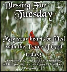 """BLESSING FOR TUESDAY: Philippians 4:6,7 (1611 KJV !!!!) """" Be careful for nothing; but in everything by prayer and supplication with thanksgiving let your request be made known unto God."""" (7) """" And the peace of God, which passeth all understanding, shall keep your hearts and minds through Christ Jesus.""""  MAY YOUR HEARTS BE FILLED WITH THE PEACE OF GOD TODAY !!!!"""