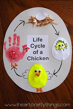 Life-Cycle-of-a-Chicken.jpg 266×400 képpont