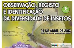 Avis: Observação, Registo e Identificação da Diversidade de Insectos | Portal Elvasnews