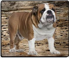 English Bulldog Mousepad by Doggie of the Day, http://www.amazon.com/dp/B00852GYLY/ref=cm_sw_r_pi_dp_wLCsrb1R9TQWJ