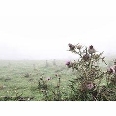 """#Setcases #Espinavell #catalunya #pirineus  #ok_landscape #phototag_nature #visual_magic  #visualsoflife"""