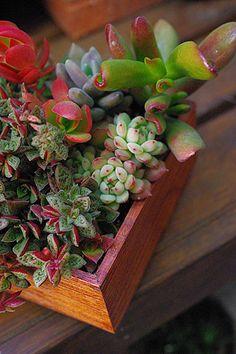 * 愉しいこと色々 *| Succulents