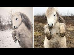 Horse Loves Clip Clop Dancing http://j.mp/2mYLs3c