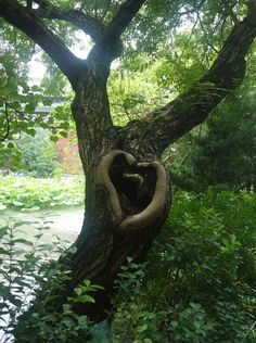 Heart in a Tree, Taipei's Botanical Gardens Heart In Nature, All Nature, Nature Tree, Romantic Nature, Mother Earth, Mother Nature, Heart Tree, I Love Heart, Tree Forest