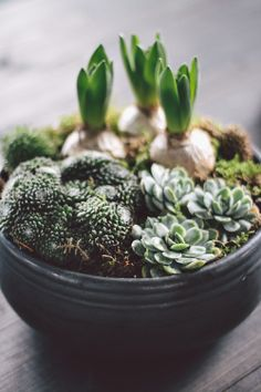 Succulent garden with spring bulbs Air Plants, Potted Plants, Garden Plants, Indoor Plants, Nature Plants, Cacti And Succulents, Planting Succulents, Planting Flowers, Succulent Containers