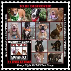 TO BE DESTROYED 10/27/16 - - Info  Please Share:  To rescue a Death Row Dog, Please read this:http://information.urgentpodr.org/adoption-info-and-list-of-rescues/  To view the full album, please click here:http://nycdogs.urgentpodr.org/tbd-dogs-page/ Please Share:-  Click for info & Current Status: http://nycdogs.urgentpodr.org/to-be-destroyed-4915/