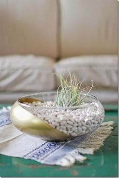 air plant in gold dipped bowl