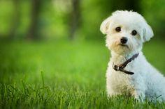 Come proteggere gli animali dal caldo e dallo sforzo eccessivo. Tutto in 10 mosse