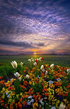 The Sun Just Touched the Morning by Phil Koch - Photo 151713339 - 500px