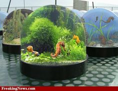 1000 images about the magical world of seahorses for Seahorse fish tank