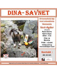 SAVNET: Drivenesheia mot Lolandsheia,Vennesla-Vest-Agder ( 25.10.15).. NAVN: Dina.. RASE: Dachs.. KJØNN: Tispe.. ALDER: 8 år.. CHIP: Jas.. BÅND: Halsbånd.. POLITI/ JAKTLAG: Varslet..  KONTAKT: Linda Mikalsen Ramsland 481 40 425.. HJERTEkontakt: Lucia 992 68 386 og Jan-Tore 473 34 294 ..