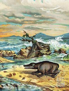 1888 Giant Amphibian of Triassic Coast Premium Poster by Paul Stewart at Art.com Dinosaur Posters, Prehistoric World, Science Photos, Buy Prints, Amphibians, Photo Library, Find Art, Framed Artwork, Vivid Colors