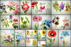 I found a Deutsch copy of this book ata library in Cologne. This is the first book from which I seriously started to learn to paint. It shows how to paint 50 differentcommon flowers…