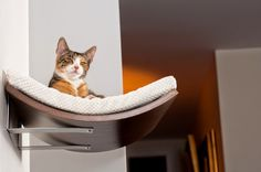 Shelves for cats by cosyanddozy.com http://en.dawanda.com/shop/cosyanddozy