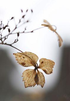 birdcagewalk: valscrapbook:lensblr-network: by Glass Half… Seed Pods, Autumn Garden, Potpourri, Beautiful Images, Autumn Leaves, Photo Art, Nature Photography, Flora, Seeds