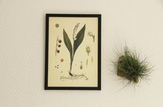 Lilly of the valley next to a flying plant. Green and white, bark and a black simple frame. Easy interior.