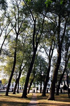 Bended trees in the Begijnhof, Bruges | Belgium(by Nacho Coca)