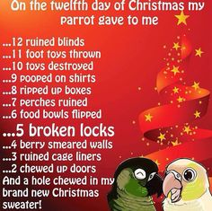 Parrot 12 days of Christmas Parrot Pet, Parrot Toys, Funny Birds, Cute Birds, Bird Pictures, Funny Animal Pictures, Parrot Quotes, Funny Parrots, Twelve Days Of Christmas