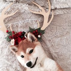 Flower antlers / wall antlers / antler decor / Shiba inu by Baby.MORE / www.babymore.lv / babymoregoods@gmail.com