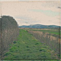 Near #borth. #wales .. Photograph  Fine Art Print