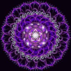 Purple mandalas